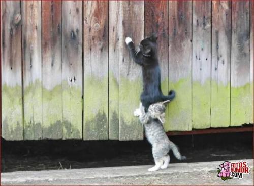 812011350341775-gatos-graciosos